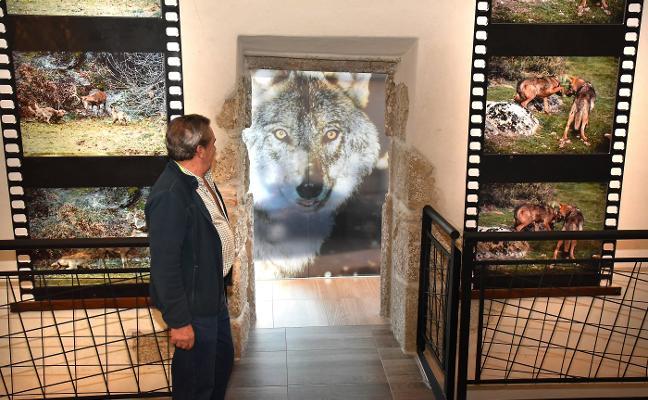 Más de ocho mil personas han pasado ya por el museo extremeño del lobo
