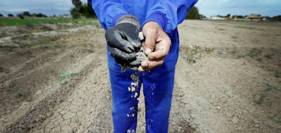 La sequía cambia el plan de siembras