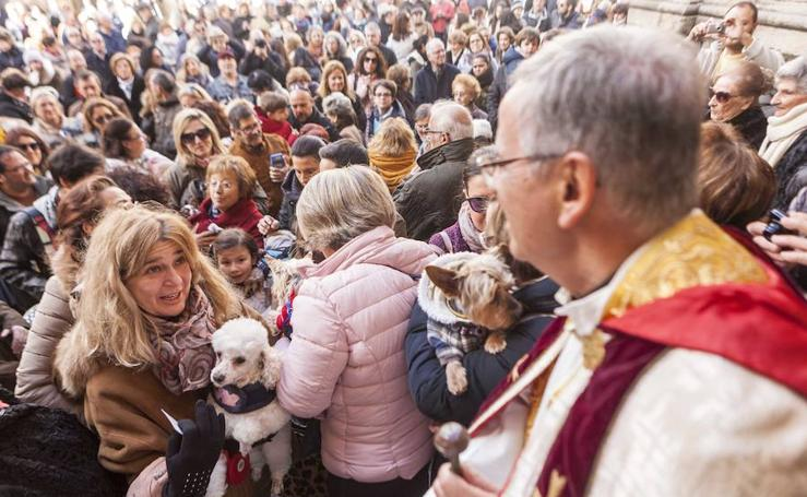 Bendición de animales en Cáceres