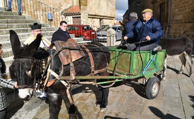 Bendición de los animales en Trujillo por San Antón
