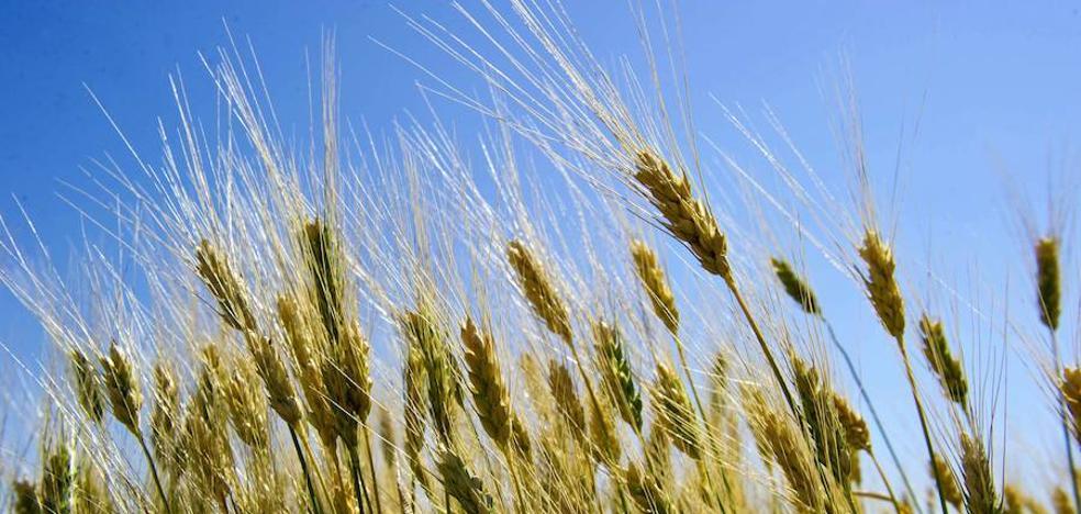 La sequía dispara un 87% las pólizas de seguros en cultivos herbáceos