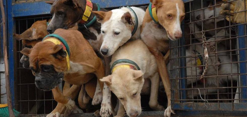 Exigen a la Junta modificar la normativa de desparasitación de perros