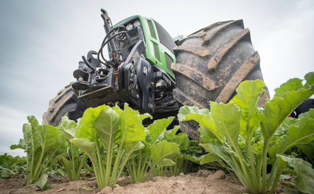 Extremadura dispondrá de 40.000 hectáreas para plantar remolacha si viene la azucarera