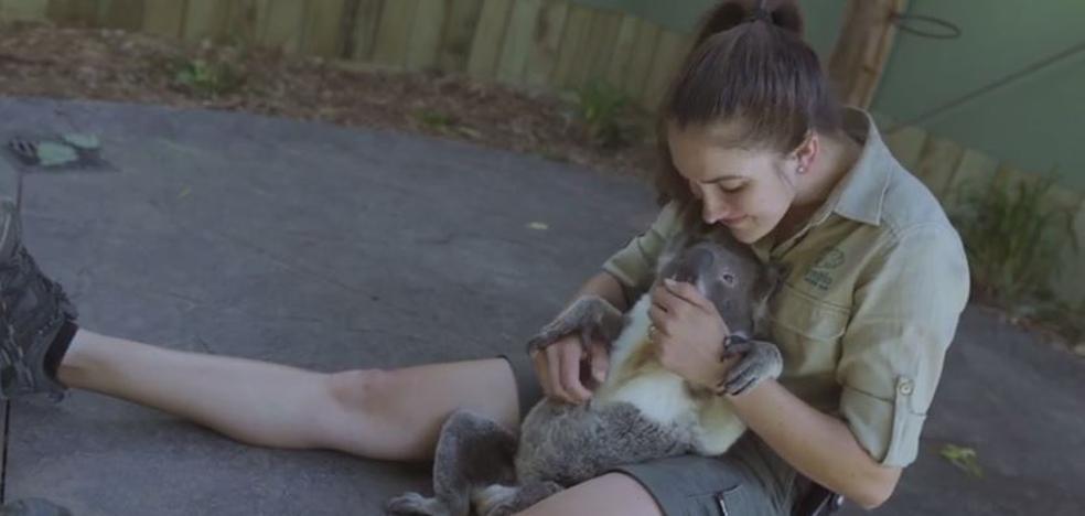 El koala más adorable
