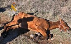 Investigan a un portugués por la muerte de un caballo en Los Santos