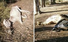 La Confederación denuncia que se tiran animales muertos y basura en el río en Mérida