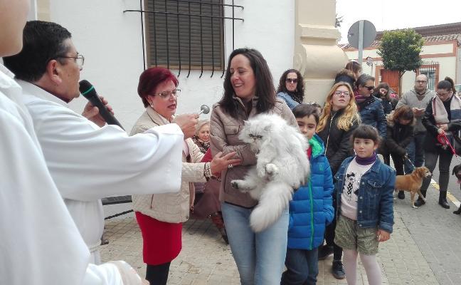 114 animales fueron bendecidos en la festividad de San Antón en Almendralejo