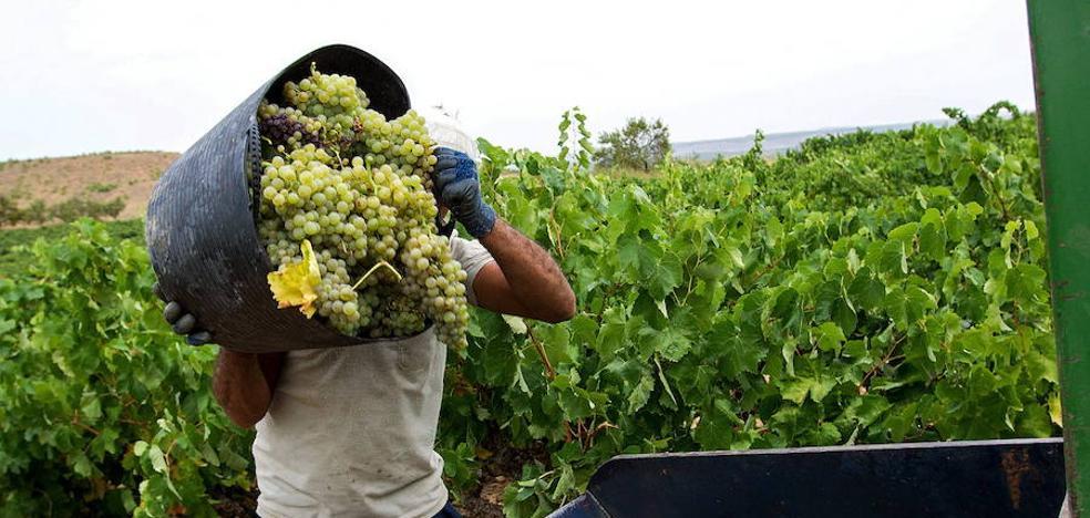 Una tesis analiza la respuesta de los vinos extremeños a las condiciones climáticas