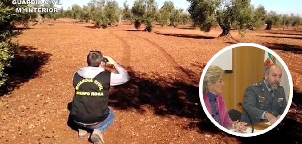 19 detenidos por robar y comprar aceitunas en Tierra de Barros y Río Bodión