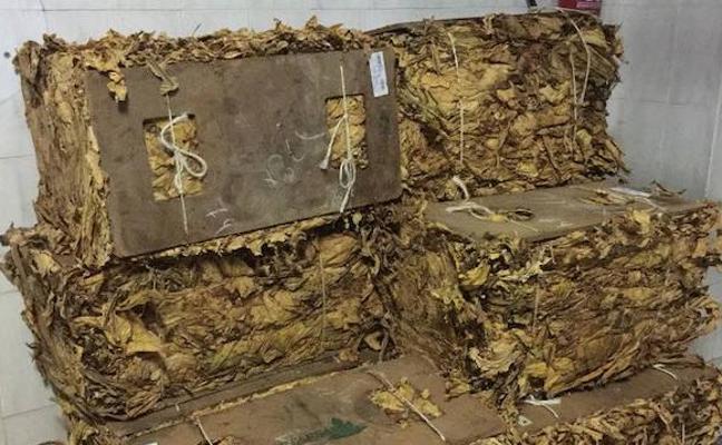 El contrabando de hoja de tabaco, otra amenaza para un sector con dificultades en la región