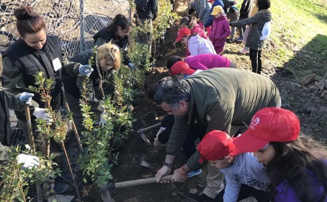 El Ayuntamiento y los colegios reforestan las zonas quemadas del parque de Cadenetas