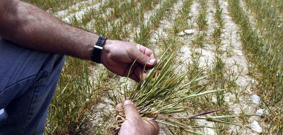 Los préstamos por la sequía podrían llegar a 9.000 agricultores y a los 165 millones