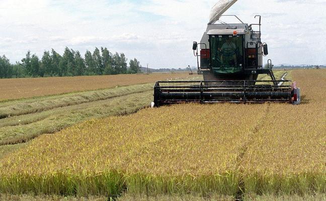 La Unión dice que Extremadura mantendrá la producción de arroz