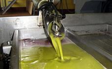 La producción de aceite de las 131 almazaras extremeñas supera las 58.000 toneladas