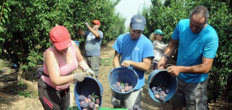 Extremadura exige al Gobierno que no dificulte nuevas plantaciones de frutales
