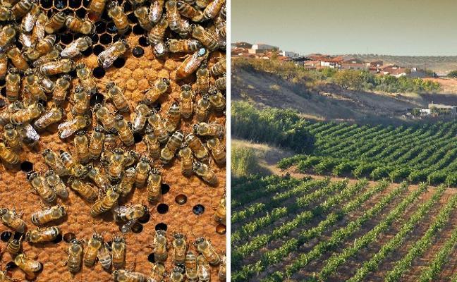 Aprobados 2,2 millones de euros en ayudas a la apicultura y cerca de 1,5 para viñedos