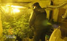 Detenido un vecino de Plasencia por tres plantaciones de marihuana en Salamanca