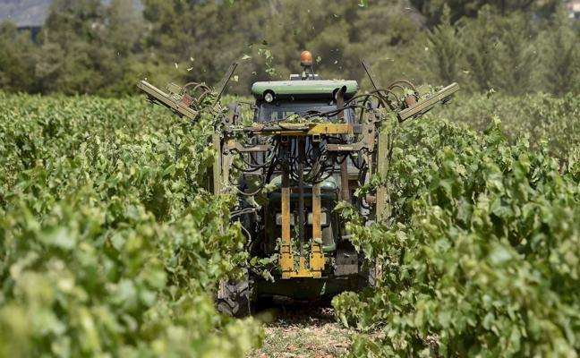 El Gobierno abre otro conflicto con el cava por el reparto de nuevas plantaciones