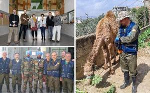 Expedición veterinaria a Líbano