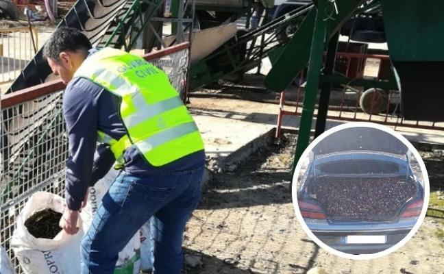 Nueve investigados por el hurto de ocho toneladas de aceitunas en la provincia cacereña