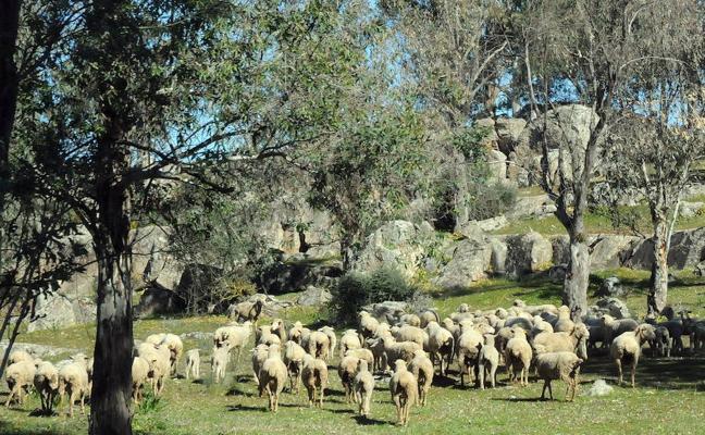 Aprobadas las ayudas destinadas a préstamos para agricultores y ganaderos por 4 millones de euros