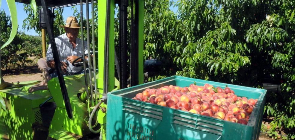 El Gobierno no aclara si finalmente limitará la plantación de frutales