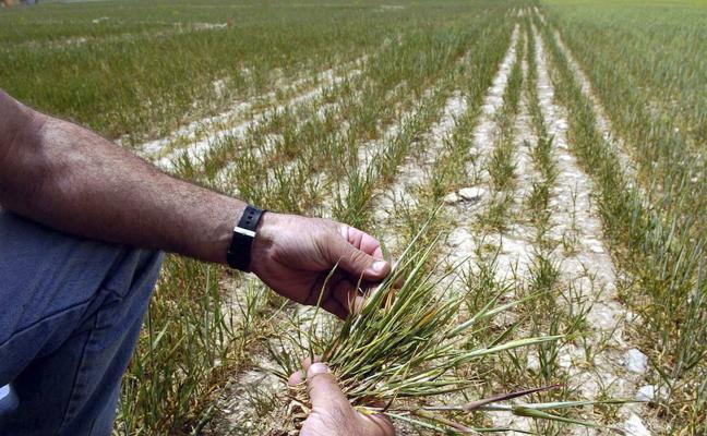El Congreso aprueba el proyecto de ley de ayudas a la agricultura por sequía