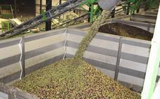 Un proyecto de la UEx convierte el hueso de aceituna en combustible limpio