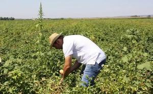APAG Extremadura Asaja advierte de retraso en las ayudas de la PAC