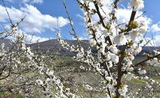 El Valle del Jerte celebra del 17 de marzo al 3 de mayo la 'Primavera y Cerezo en Flor'