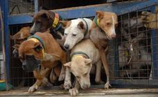 La Junta cambiará la norma sobre desparasitaciones de los perros de caza