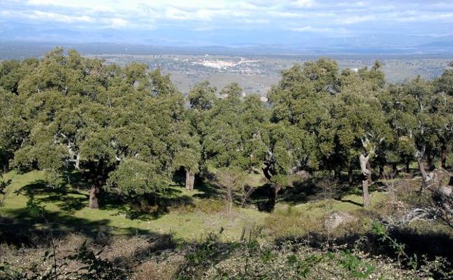 Valcorchero acogerá este domingo una batida de jabalíes cinco años después
