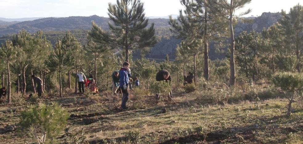 Programa de voluntariado ambiental Plantabosques