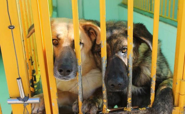 La perrera de Badajoz retomará los sacrificios el próximo mes si continúa el colapso
