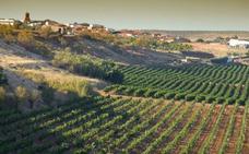 Los viticultores extremeños pueden pedir desde este martes las ayudas para la reconversión del viñedo