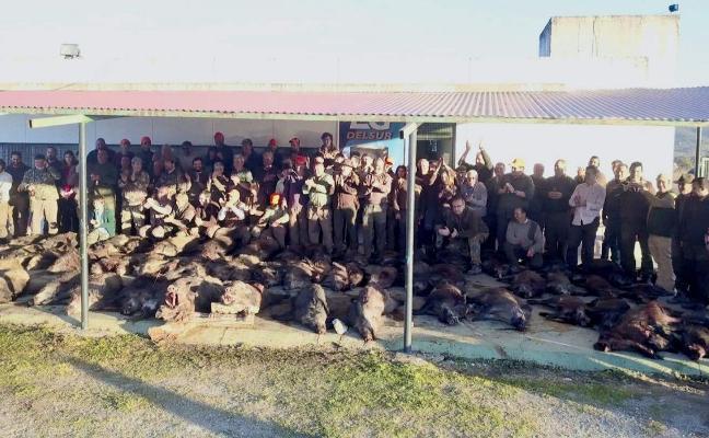 La cacería de Valcorchero se salda con 66 jabalíes abatidos