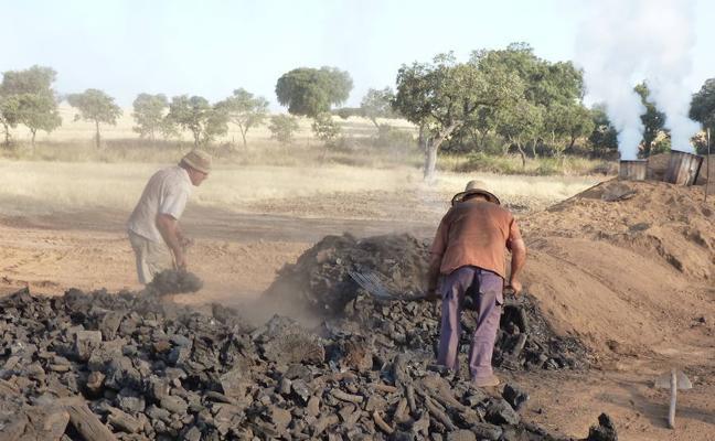 Extremadura quiere impulsar la fabricación de carbón vegetal