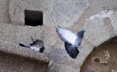 Una guía recoge las 56 especies de aves más comunes de Cáceres