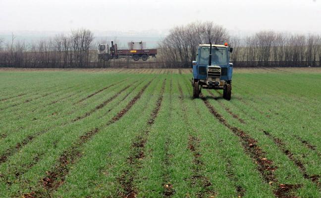 Desciende la superficie de cereales para la cosecha de este año