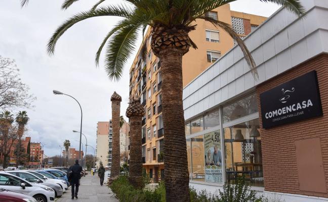Los técnicos de la Junta han hecho 135 inspecciones para detectar el picudo en Badajoz
