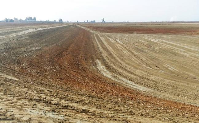 La Sierrecilla se dedicará al olivar en lugar de a frutales