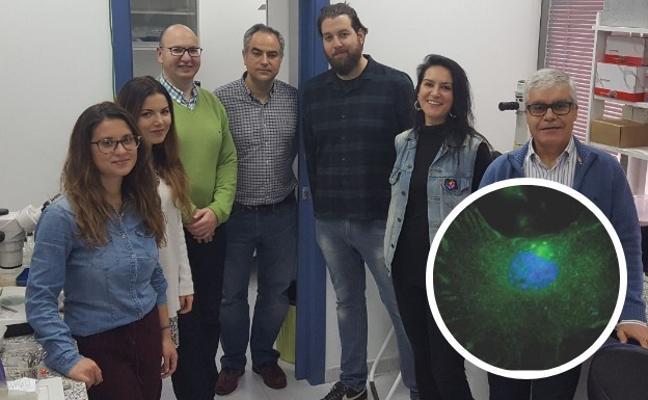 Investigadores de la UEx buscan proteínas en células madre tumorales para frenar el cáncer