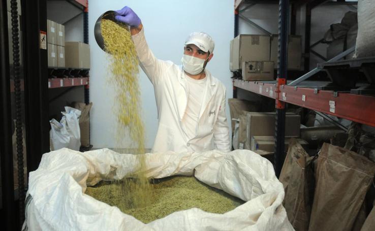 Aromas ecológicos convertidos en infusiones y condimentos