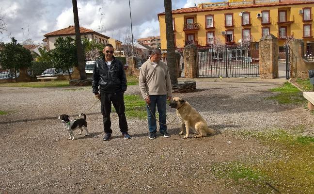 Palomeque dice que la muerte de perros envenenados no se puede investigar sin denuncias