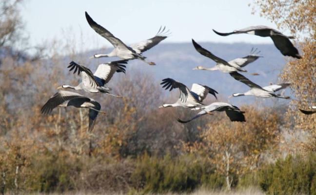 Seo/Birdlife critica la conversión en regadío de espacios protegidos para las aves
