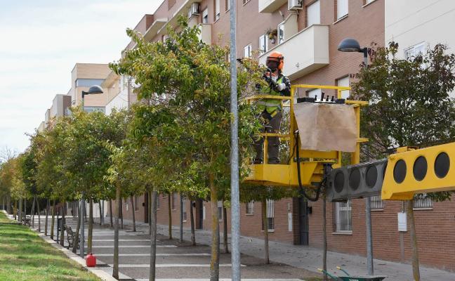 Comienza la poda de 200 árboles en la barriada pacense de Suerte de Saavedra