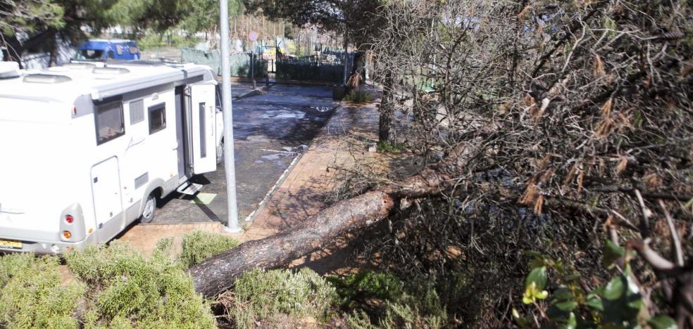 Derribado un pino junto a las caravanas y huertas anegadas en Cáceres