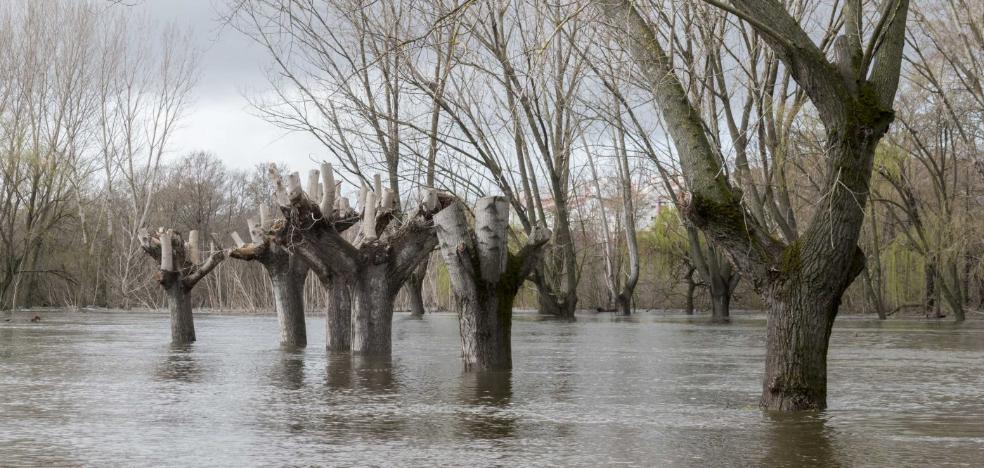 La crecida del río Jerte anega varias huertas y caminos en Plasencia