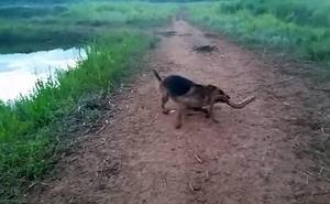 La descarga de una anguila eléctrica sobre un perro