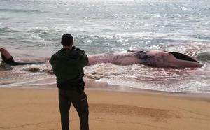 Aparece una ballena de 13 metros muerta en una playa de Barcelona